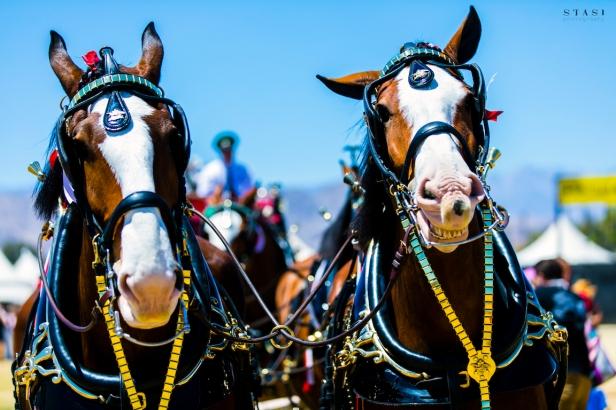 Bud-Stagecoach-Indio-CA-20170429-MattStasi-5940